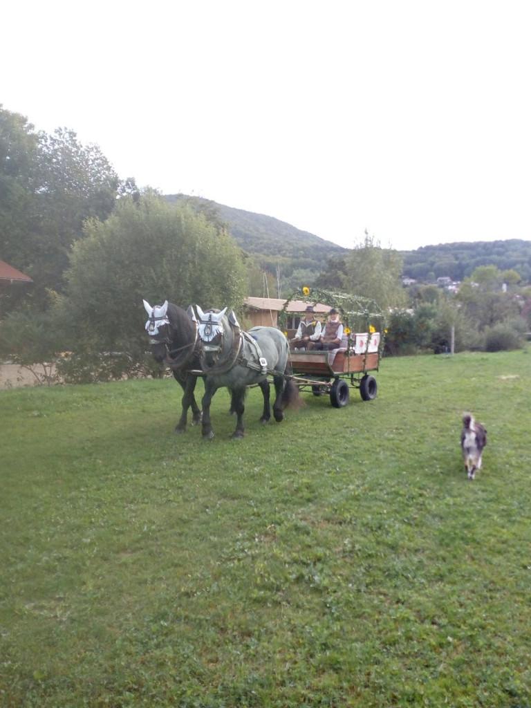Freie Trauung Dingolfing
